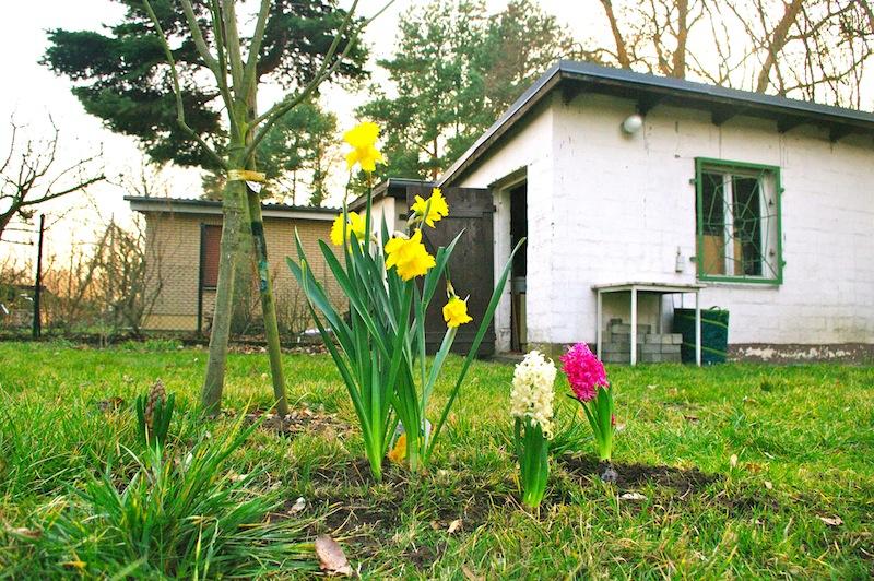 kleingarten berlin weissensee 7 frollein wei ensee. Black Bedroom Furniture Sets. Home Design Ideas