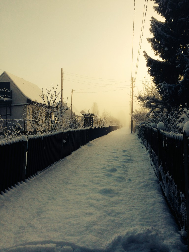 Im Märchenland in Berlin Pankow zauberte der Nebel eine traumhafte Winterkulisse.