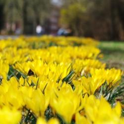 Frühling in Berlin Weißensee