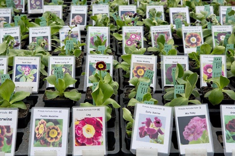 2.+3. April 2016: Berliner Staudenmarkt im Botanischen Garten Berlin